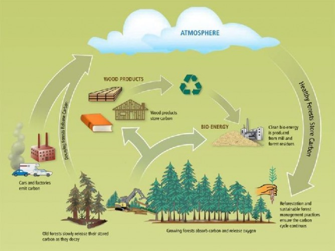 biomass cycle - photo #16