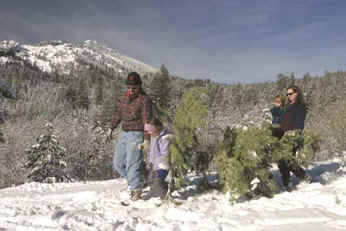 Tannenbaum Outdoor.O Tannenbaum Christmas Trees And Climate Change The Smokey Wire