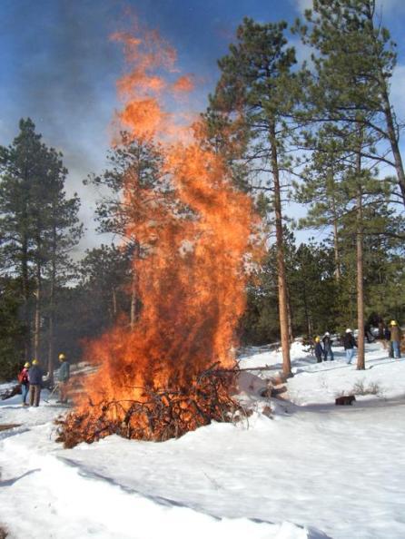 csfs-burning-slash-piles-cynthia-cox-cottam