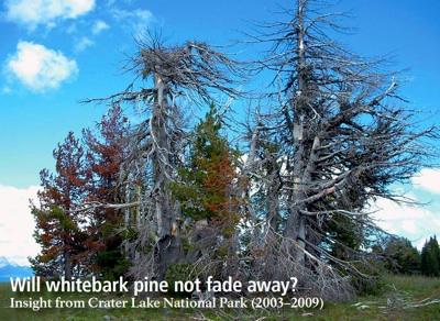 CRLA-Whitepark Pine NPS